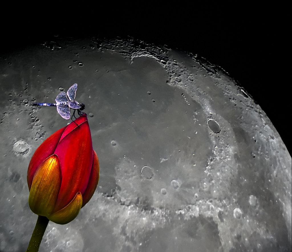Vesikiil ja Kuu